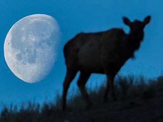 July 2019: The Next Full Moon is the Buck Moon
